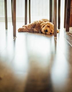 Le plancher chauffant climatise votre habitation en toute discrétion